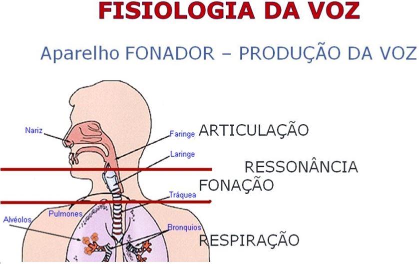 fisiologia da voz