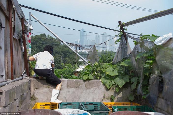Os arranha-céus brilhantes do distrito de Gangnam, em Seul lançam uma sombra sobre de vila Guryong, a última favela restante da cidade, tornando o contraste entre ricos e pobres, muito óbvio.