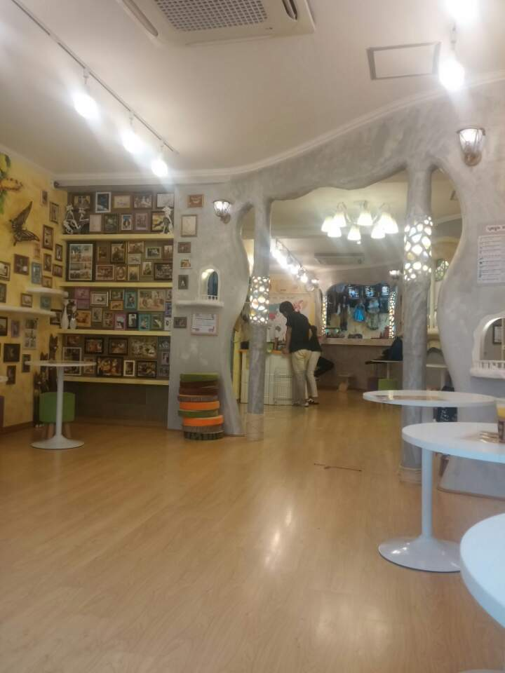 Interior do Cat Café.