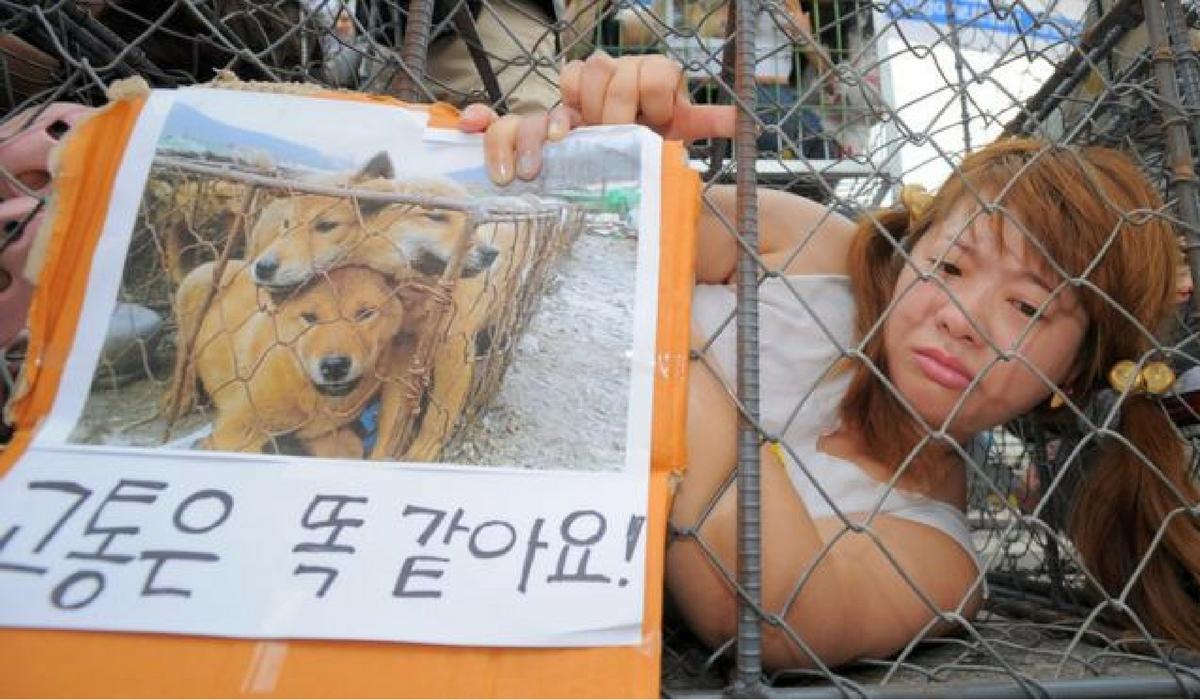 """""""Cães sentem dor igual humanos"""" em Seongnam mercado de Moran tem sido alvo de protestos de direitos animais."""