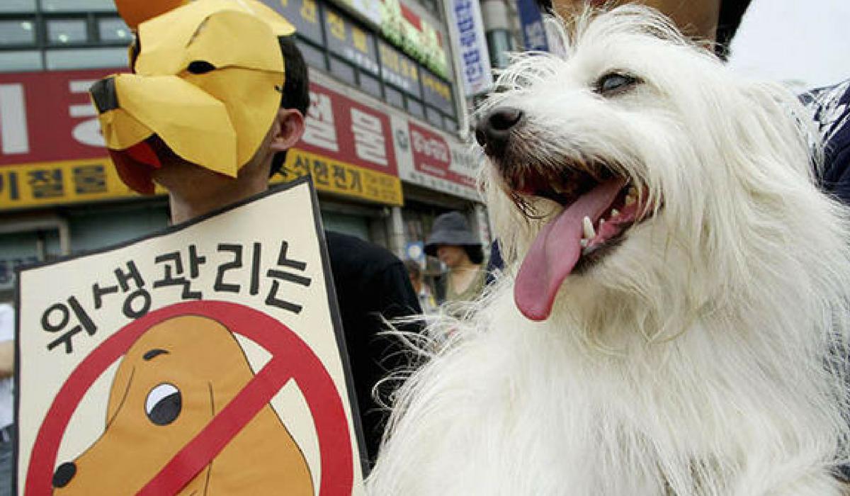 Protestos contra o abate de cães. Foto: Express.co.uk