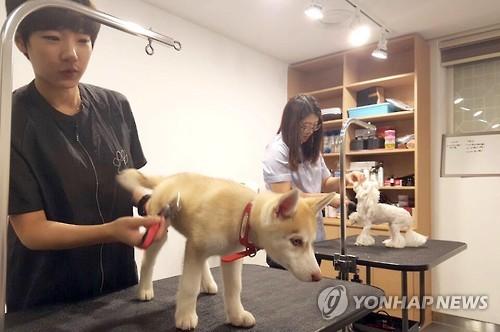 No hotel Petel, funcionários dão banho e penteiam os pets como parte dos serviços. Foto: Yonhap
