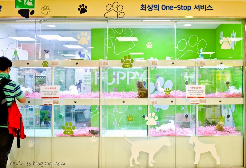 Pet Shop em Meyongdong.
