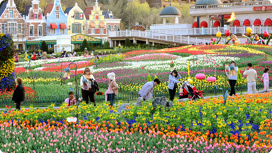 As tulipas no parque Everland. Foto: Everyday Korea