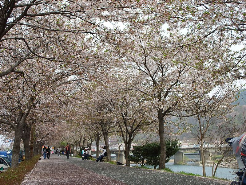 Namwon na primavera. (Região do Rio Yeocheon)/ Foto:  Shamus7792003 via Wikipedia