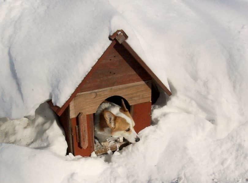 Os Animais Deverão Estar Protegidos Às Mudanças Climáticas. Foto: Dogholics