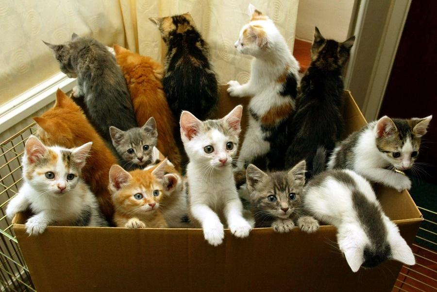 Os donos de animais não poderão ter mais pets do que sua casa comporta. Foto: Cat Daily News