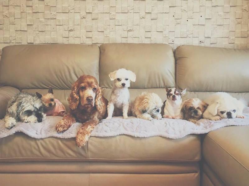 Celebridades Que Adotaram Cães Dando A Eles Uma Segunda Chance Na Vida