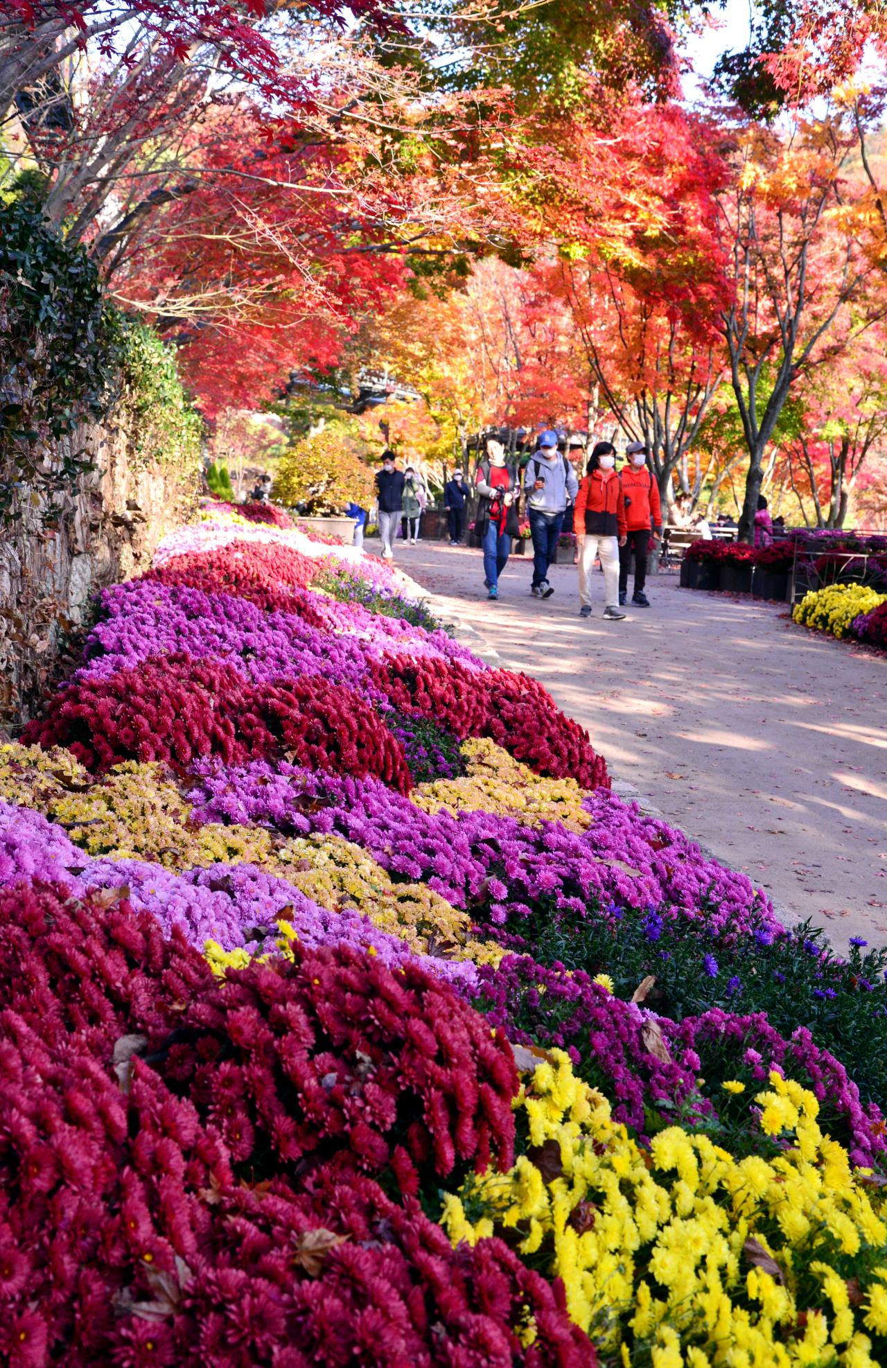 Conheça O Jardim Botânico De Hwadam, Um Paraíso De Cores