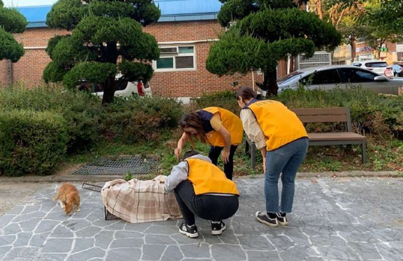 Grupo De Mulheres Se Junta Pela Conscientização Pública Sobre Gatos De Rua