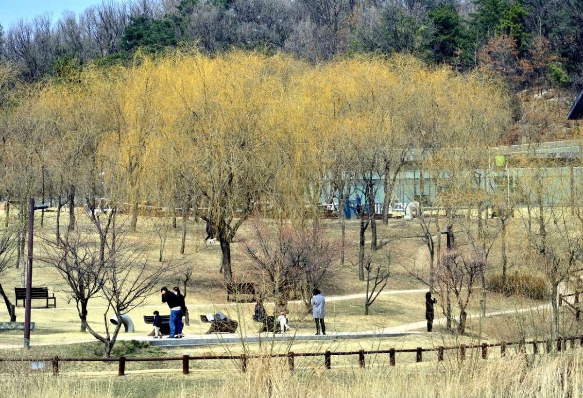 Conheça A Seul Dream Forest, A Fuga Perfeita Da Vida Agitada Da Cidade