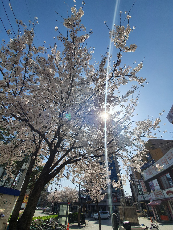 A Primavera Chegou!