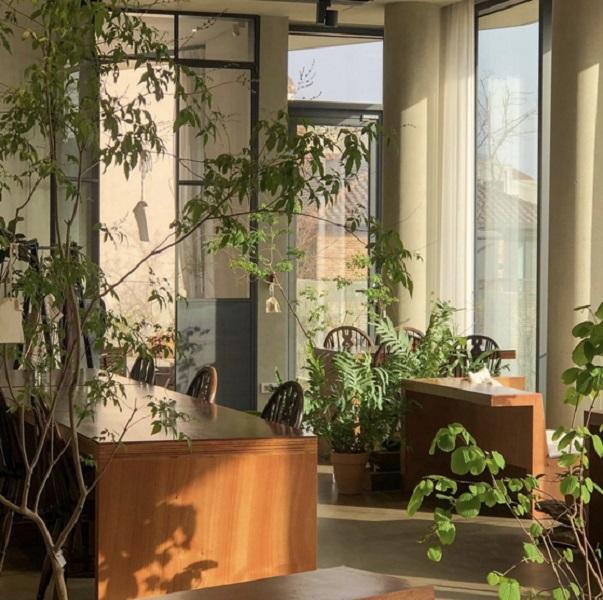 Cultivar Plantas Em Casa É A Nova Tendência Na Pandemia