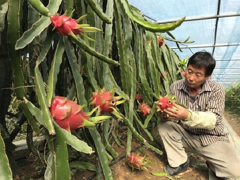 Os Coreanos Estão Fascinados Por Frutas Exóticas E Caras